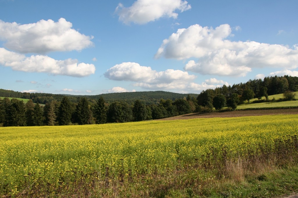 Oberpfälzer Hügellandschaft (Foto: Götte)